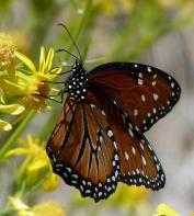 Butterfly pretty